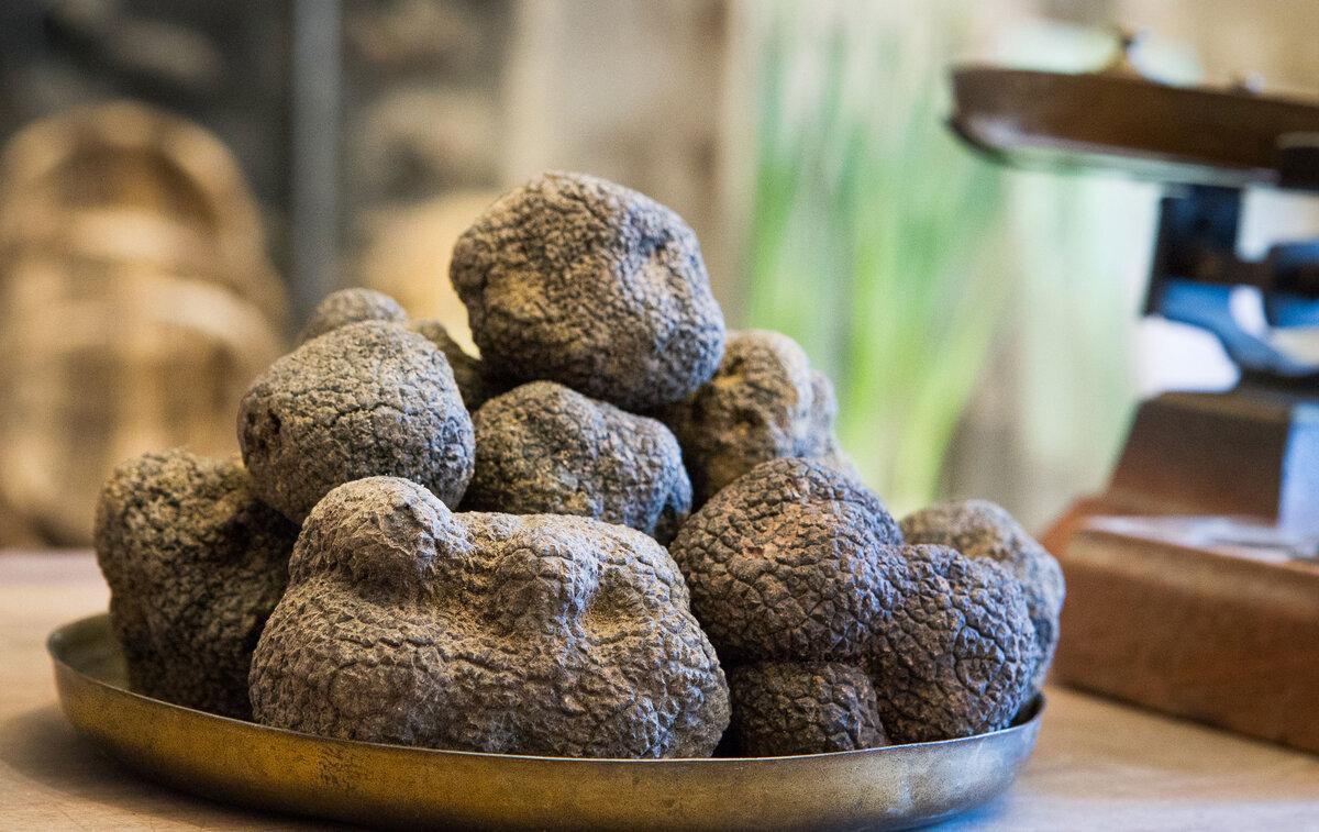 La truffe et les truffières du Tricastin (9)
